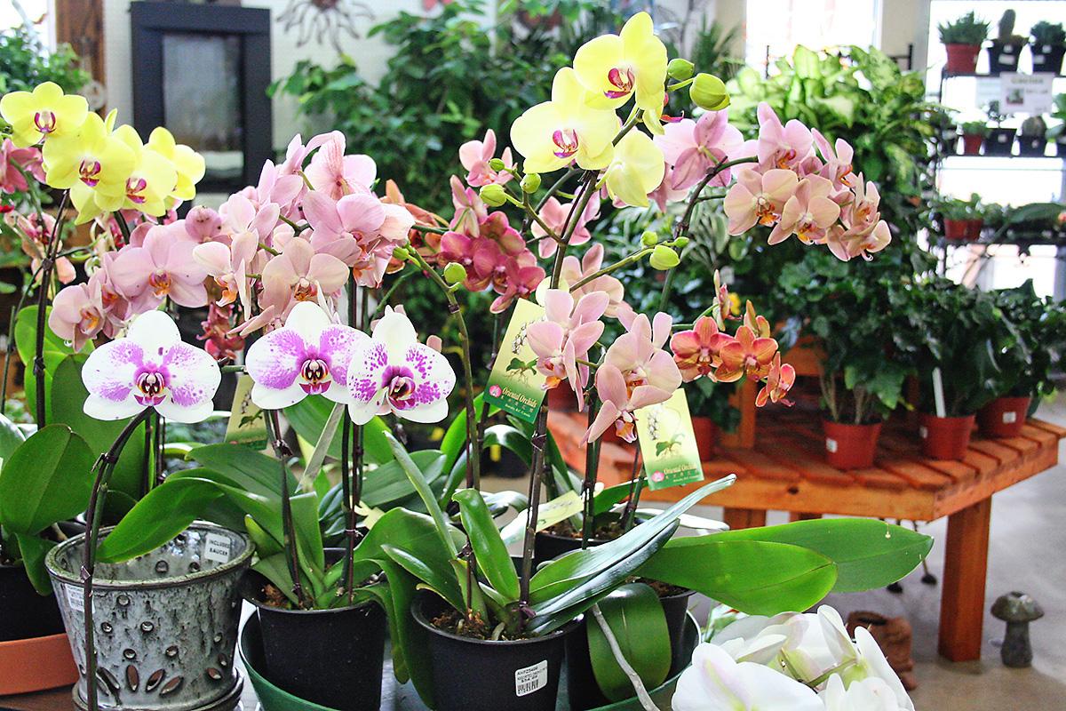 Outdoor flowers in pots