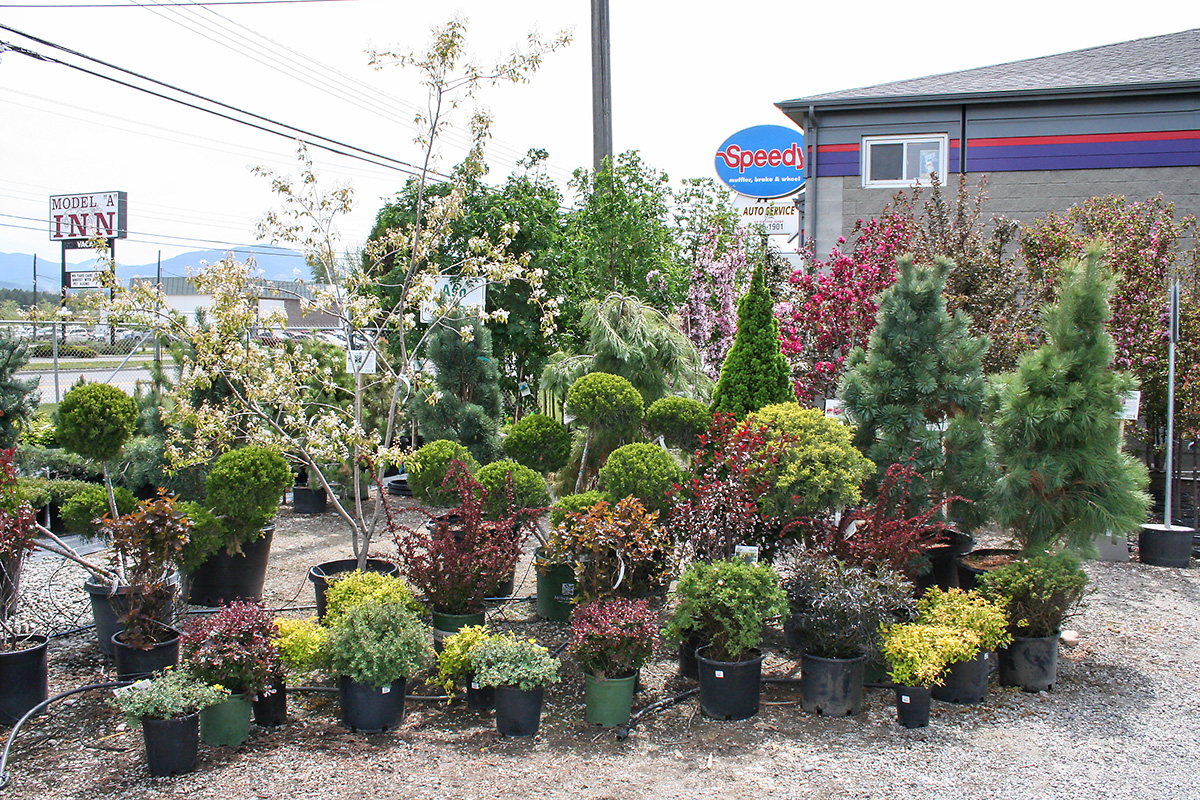 Outdoor trees, plants and shrubs