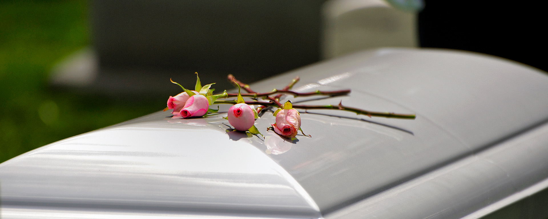 Casket with three pink roses on top