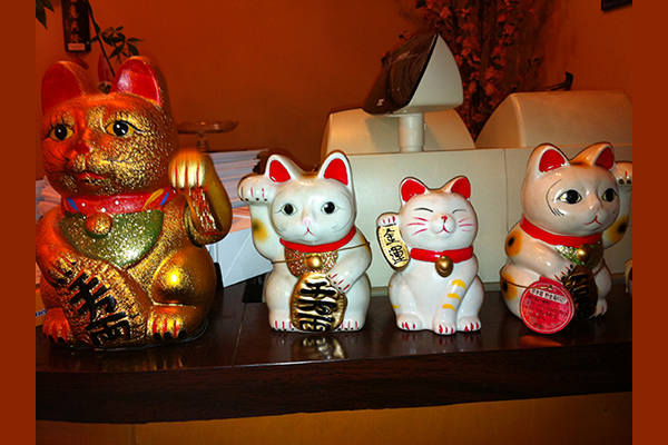 Oriental cats on display
