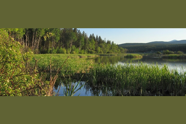 kodiak picture of a lake, forest and reeds