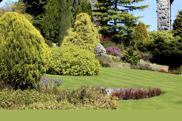 outdoor landscaped yard with trees, shrubs, and plants