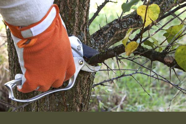 an orange glove over a man's hand using clippers to prune small, dead tree branches
