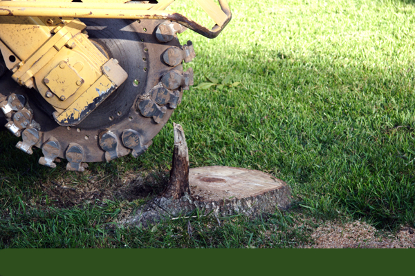 motorized equipment used for stump grinding and removal