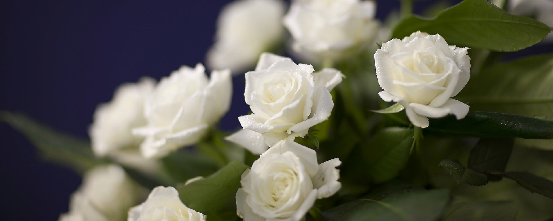 beautiful bouquet of white flowers for funeral
